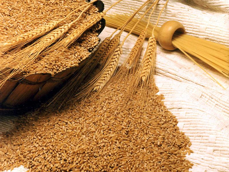 Giá lúa mì Nga tăng do nhu cầu xuất khẩu tăng mạnh